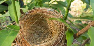 Leeg nest: kinderen zijn uitgevlogen